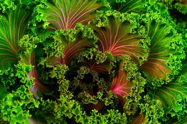 plant kale food healthy vegetable fresh